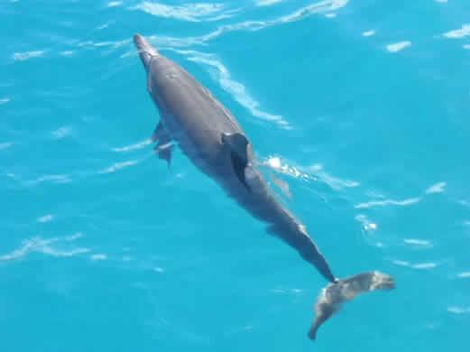 La dieta delfín y bajar de peso bebiendo agua de mar
