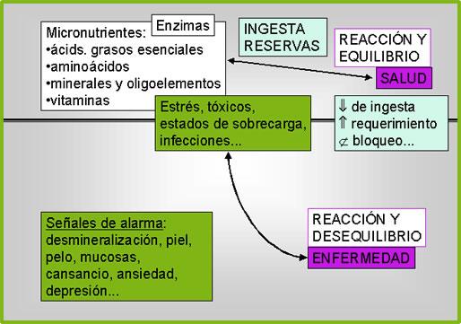 Infografía de los micro nutrientes y el equilibrio